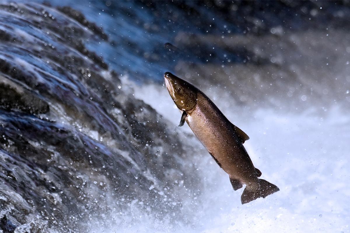 mwo-orgonodrome-schauberger-victor-trout-waterfall-2