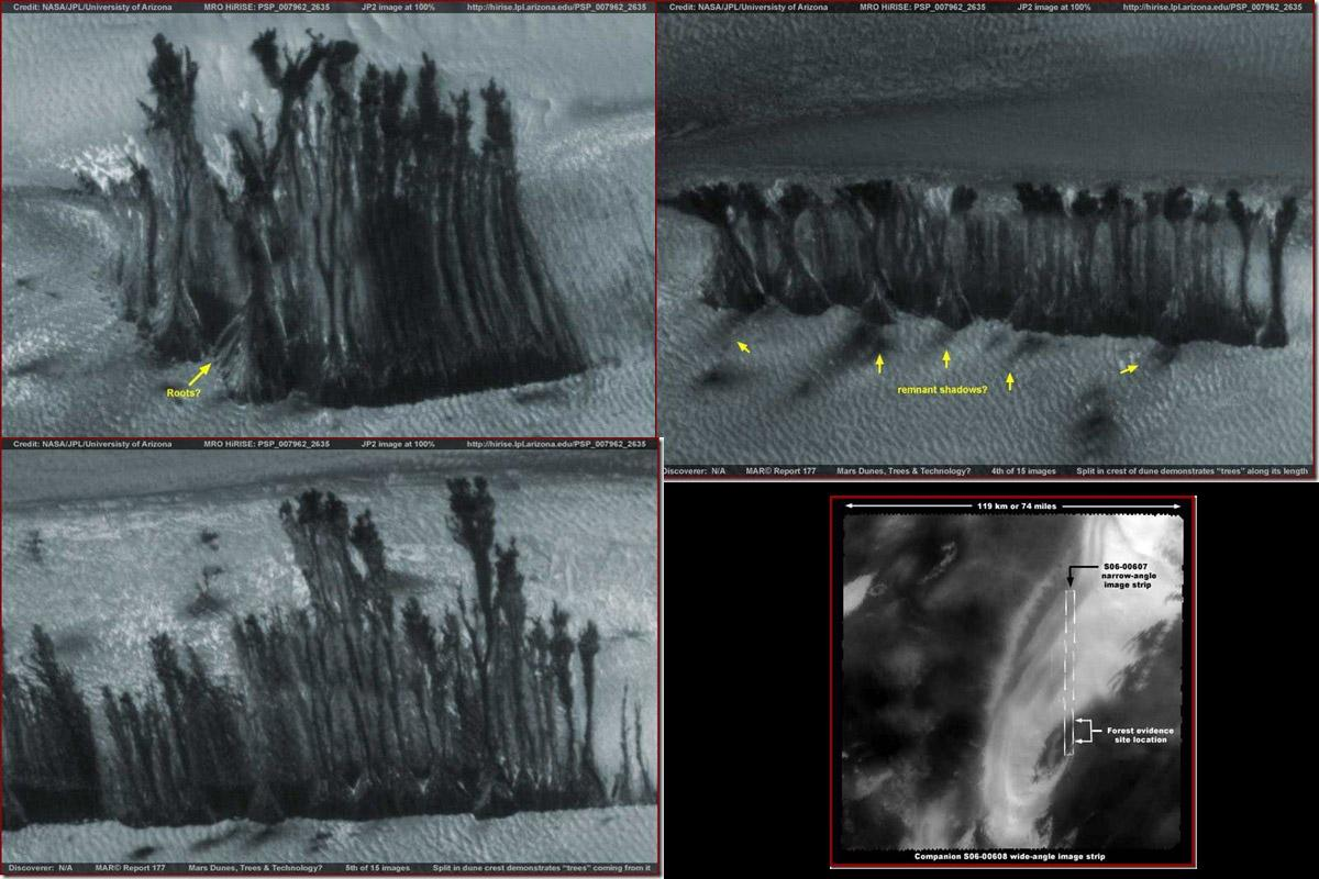 MARS LIFE terrapapers (1)