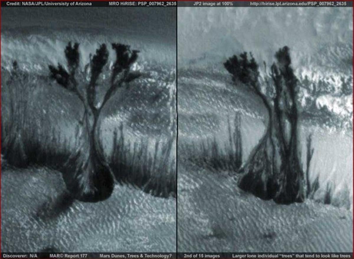 MARS LIFE terrapapers (3)